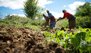 Nutrition in Africa: African leaders not sitting idle