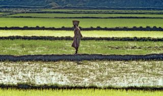 Youth exodus: Is Africa being strategically turned into a giant farm?