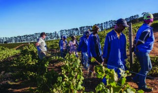 South Africa's Sour Grapes