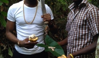 ONE and New African Agriculture Challenge: D'banj sets his sight on a Koko Farm