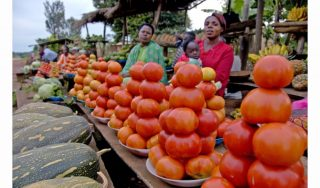Nutrition AfricaInvestor Forum to launch in Kenya