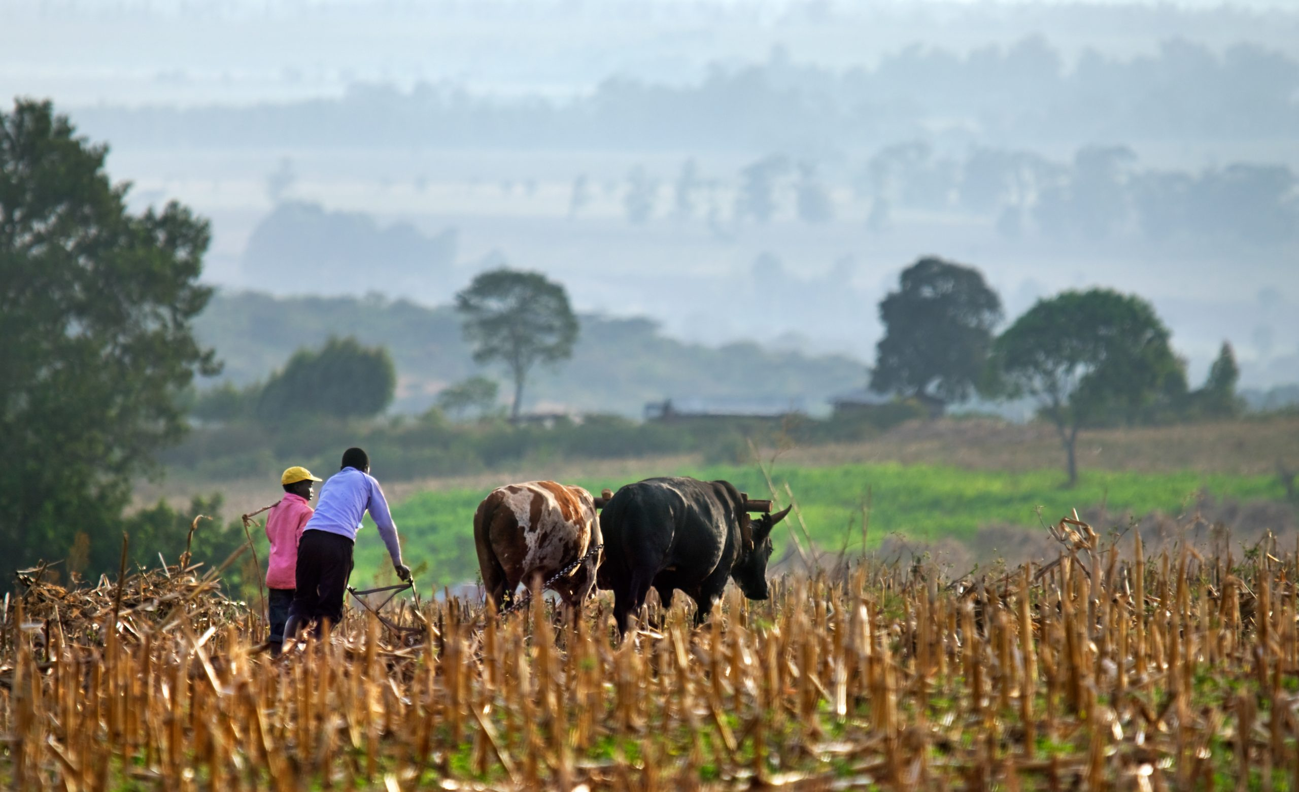 Agri-insurance key to higher yields in Africa